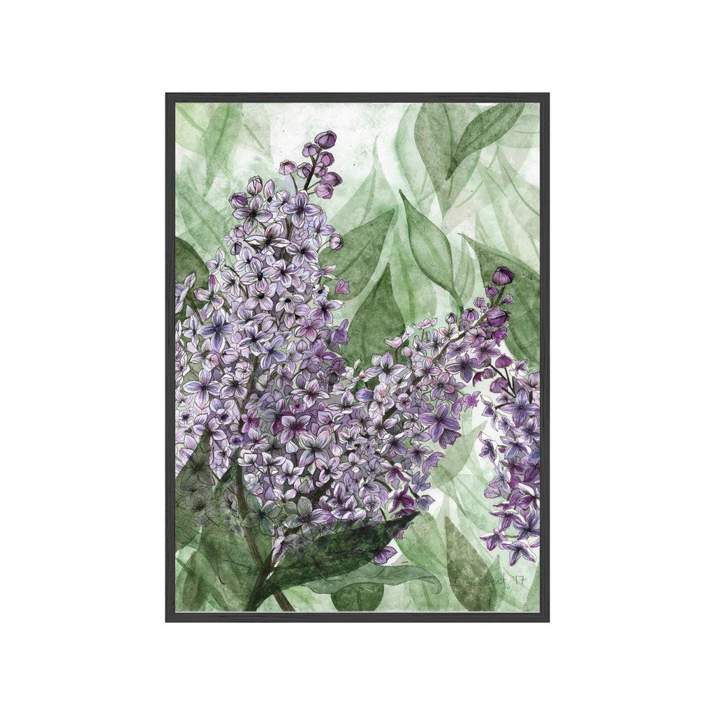 LILACS Fine Art Watercolor Print
