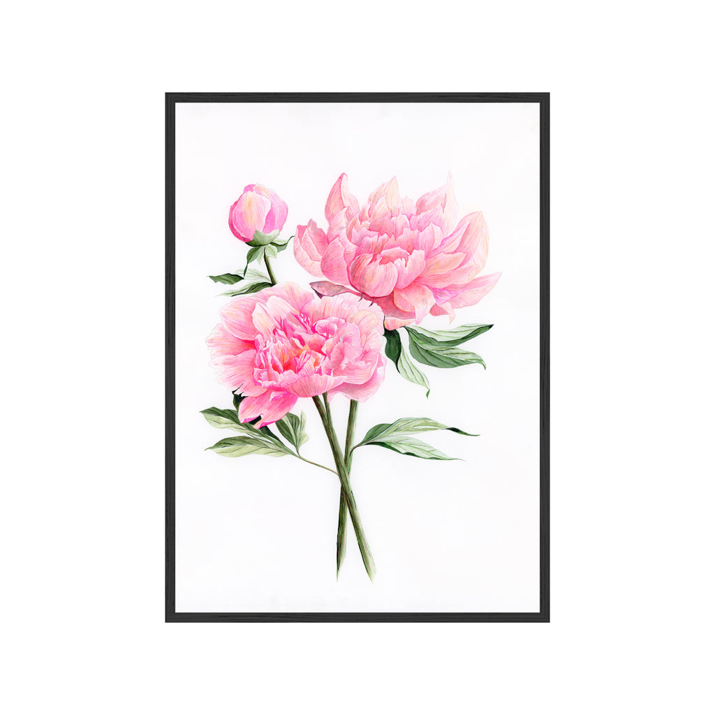 MAY PEONIES Fine Art Watercolor Print