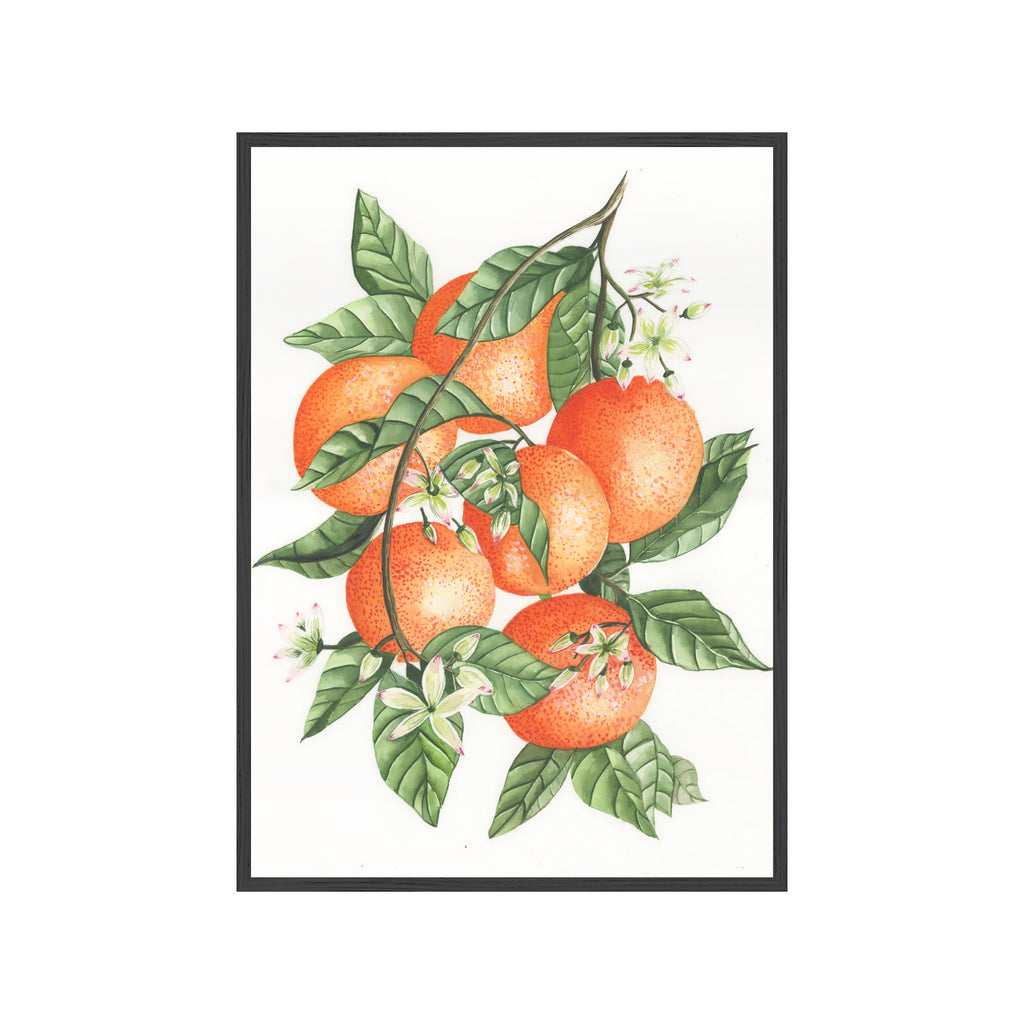 ORANGE BRANCH Fine Art Watercolor Print