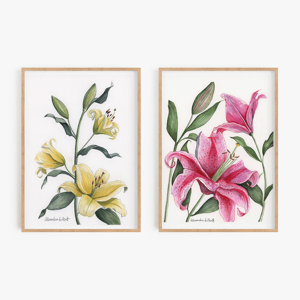 PINK STARGAZER LILY Fine Art Watercolor Print