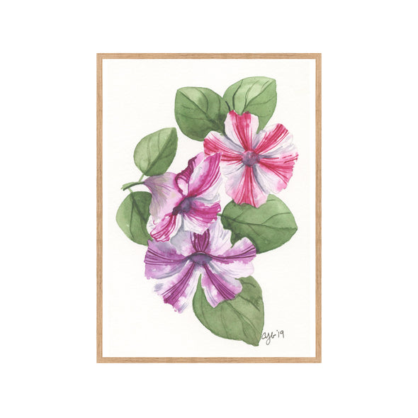 PETUNIAS Fine Art Watercolor Print