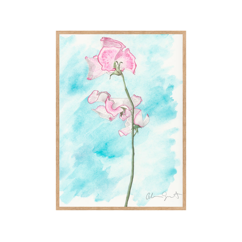 PINK SWEETPEA Fine Art Watercolor Print