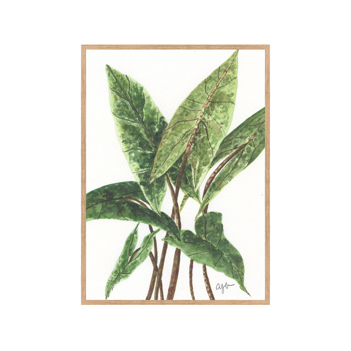 PLANT PORTRAIT NO. 1 Fine Art Watercolor Print