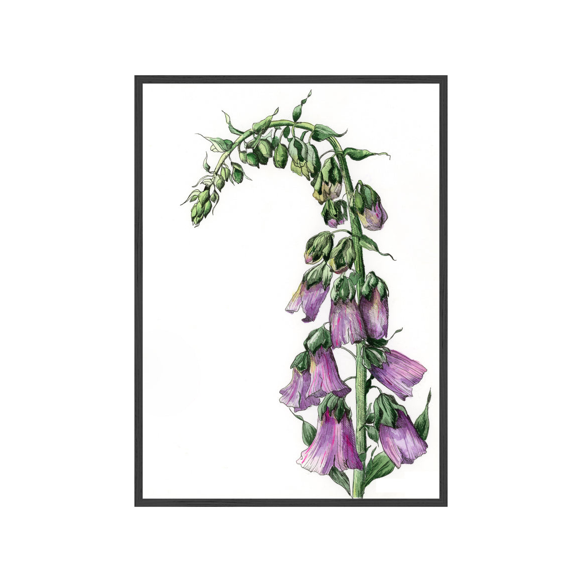 PURPLE FOXGLOVE Fine Art Watercolor Print