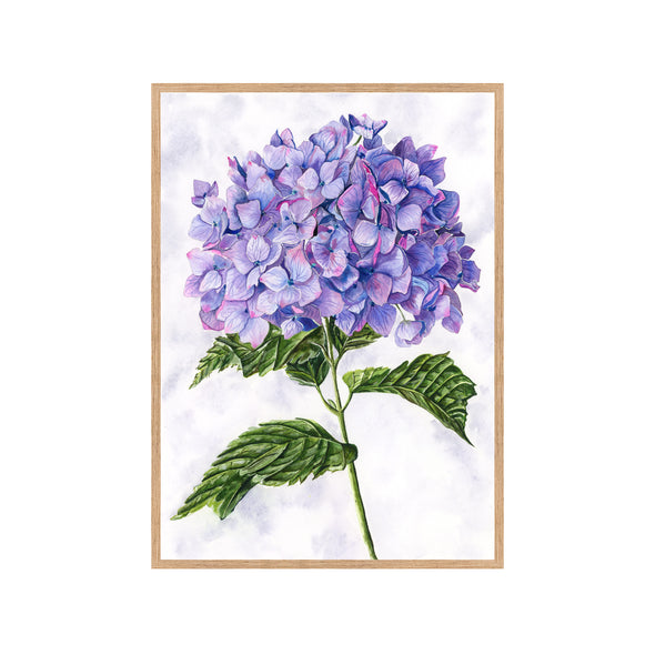 PURPLE HYDRANGEA Fine Art Watercolor Print