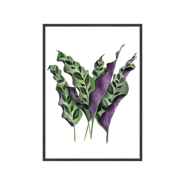 RATTLESNAKE PLANT Fine Art Watercolor Print