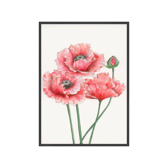 Red Poppies {The Archives}
