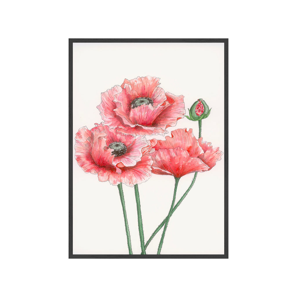 LARGE RED POPPIES Fine Art Watercolor Print