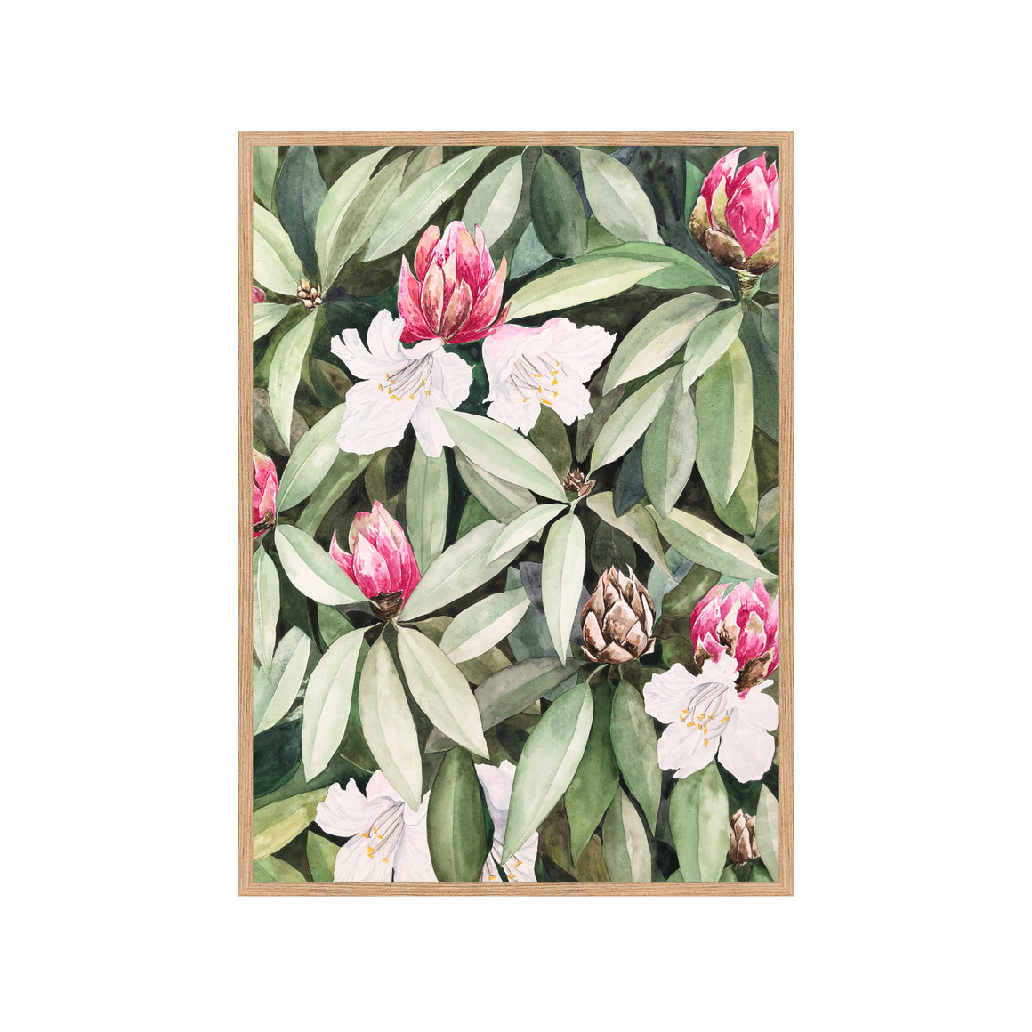 RHODODENDRON Fine Art Watercolor Print