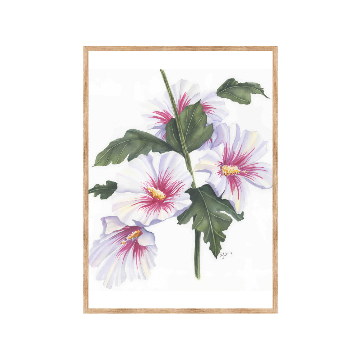 ROSE OF SHARON Fine Art Watercolor Print