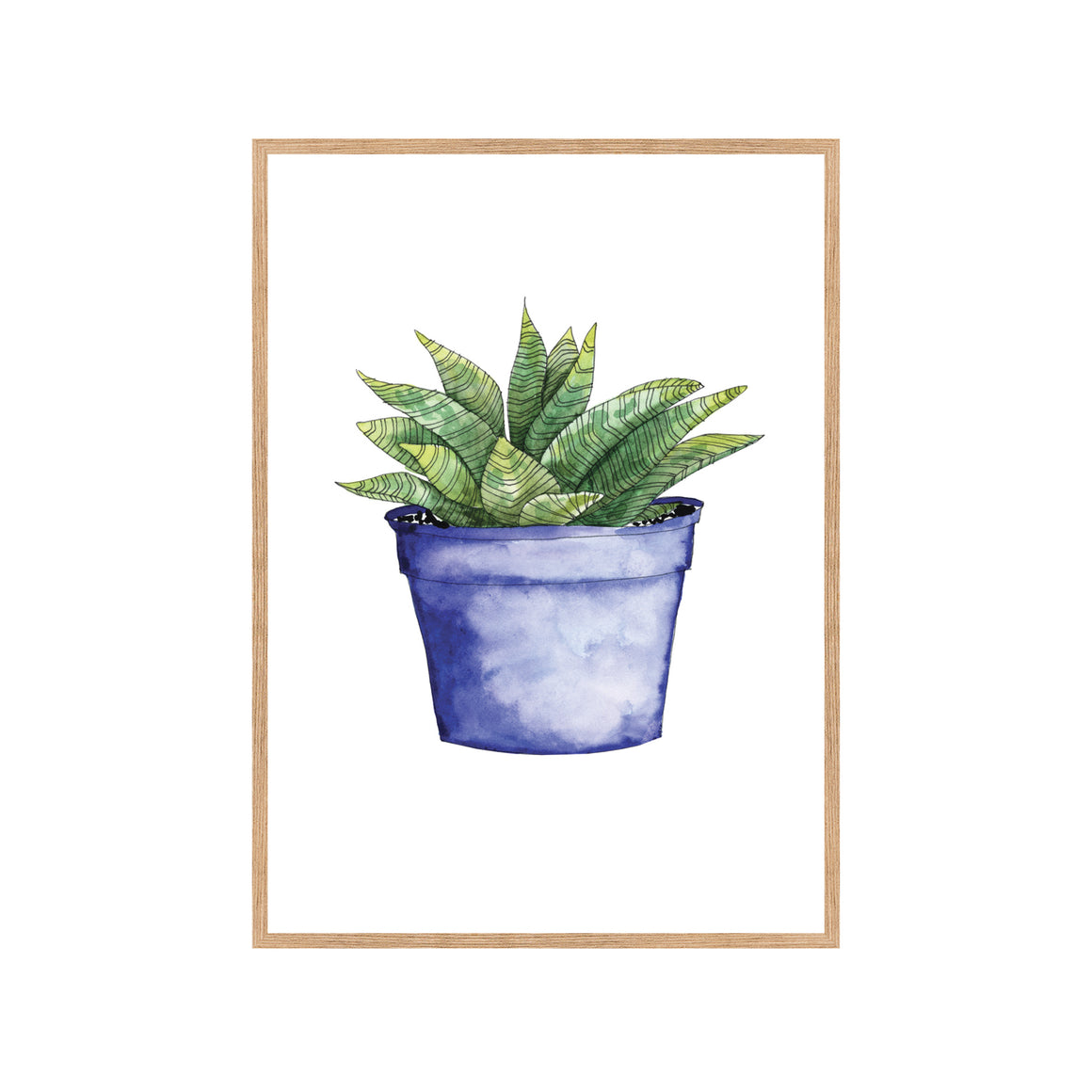 SUCCULENT IN BLUE POT Fine Art Watercolor Print
