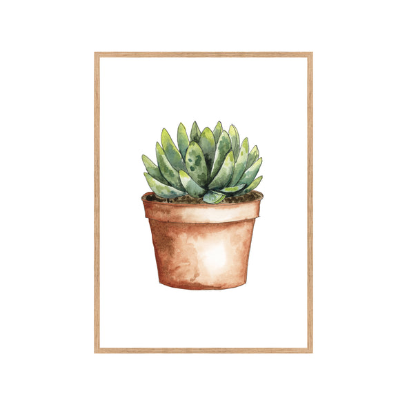 SUCCULENT IN TERRA COTTA POT Fine Art Watercolor Print