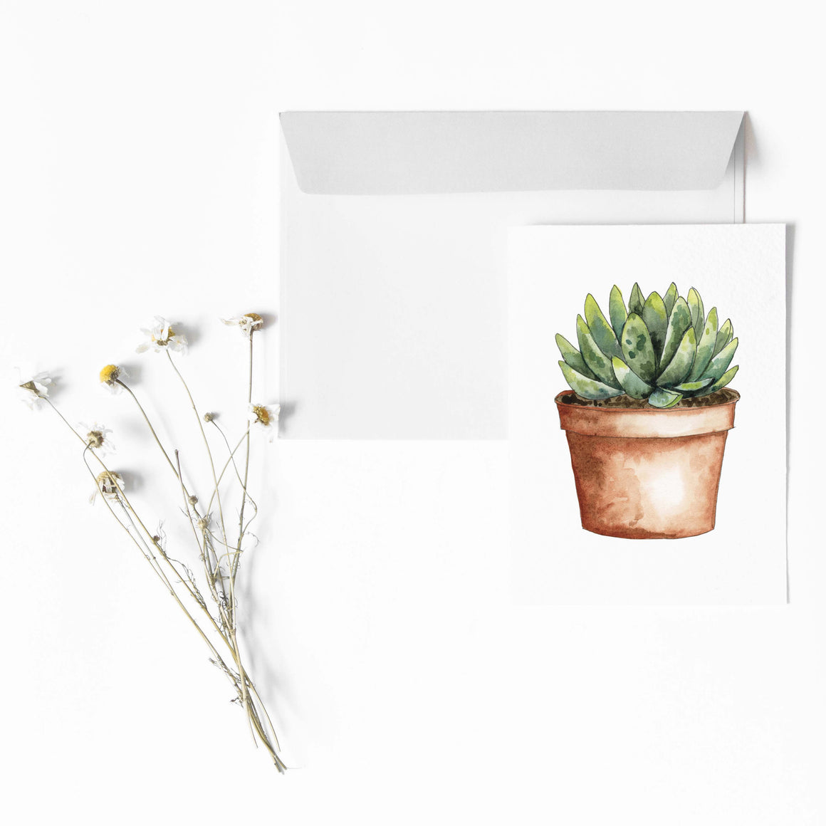 SUCCULENT IN TERRA COTTA POT Botanical Note Card