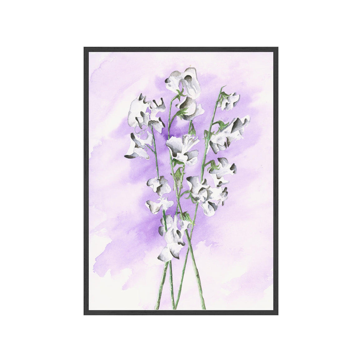SWEET PEAS Fine Art Watercolor Print