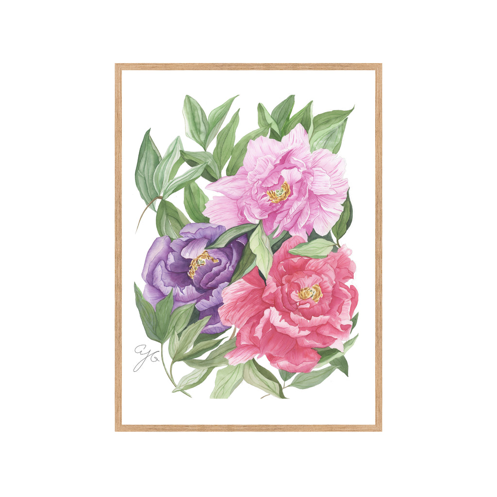 THREE MULTICOLORED PEONIES Fine Art Watercolor Print