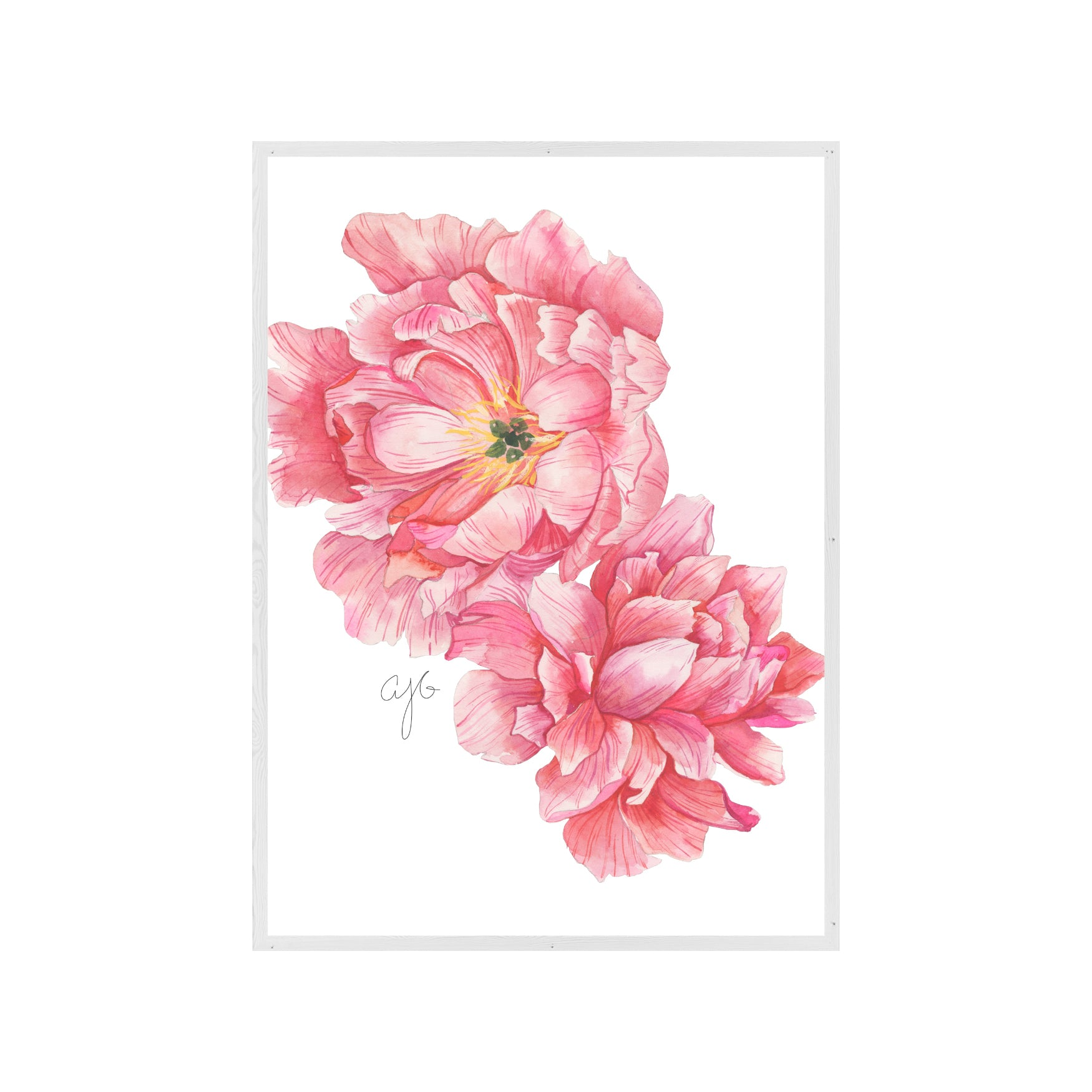 TWO PINK PEONIES Fine Art Watercolor Print