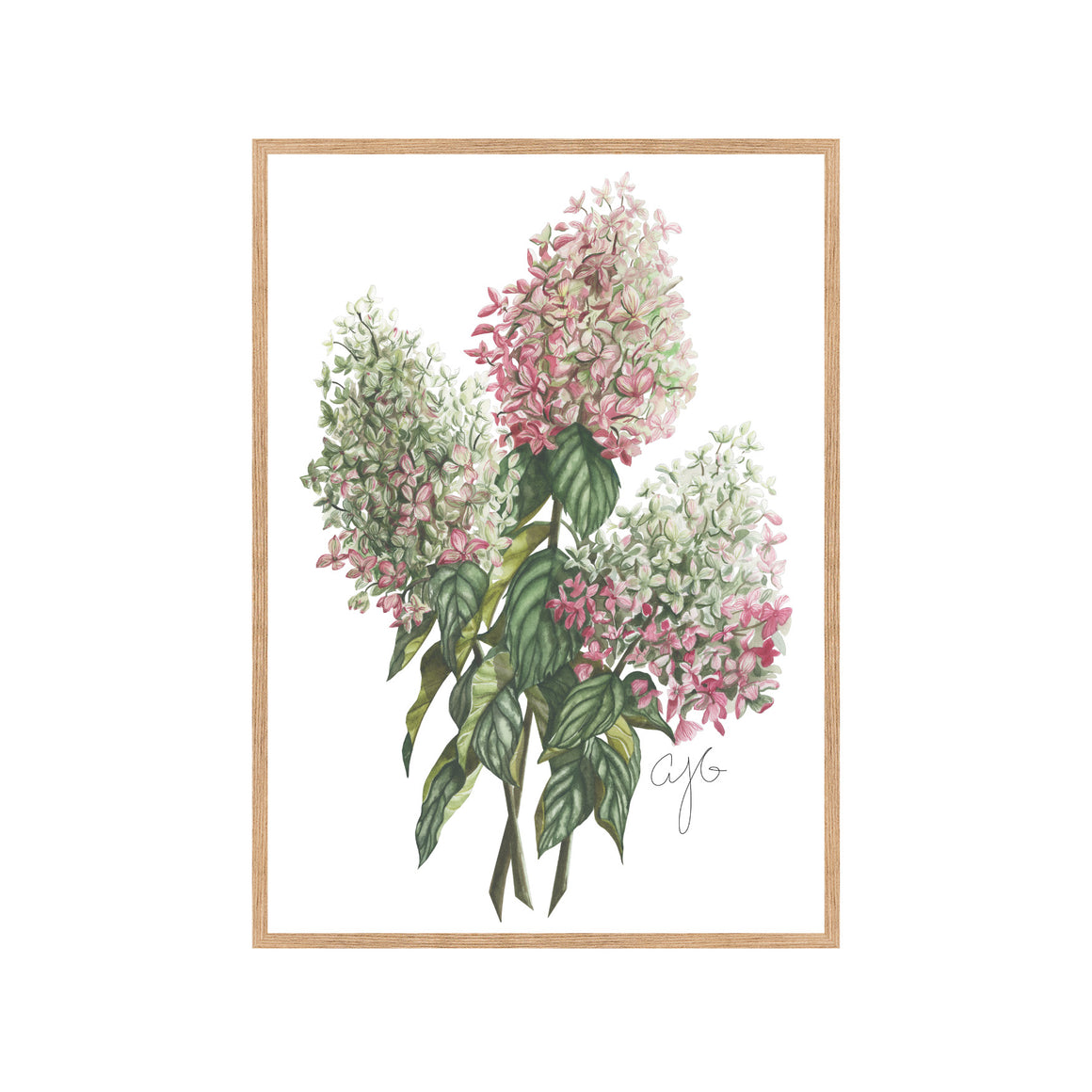 VINTAGE HYDRANGEAS Fine Art Watercolor Print