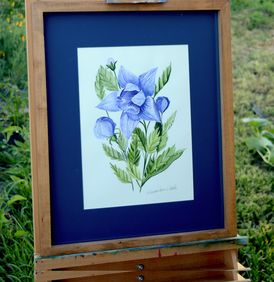 Blue Balloon Flower {The Archives}