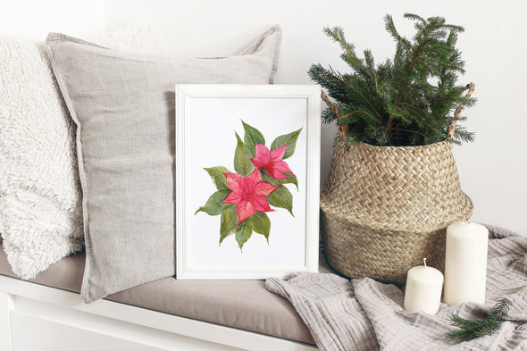 Large Poinsettia : A Thrill of Hope