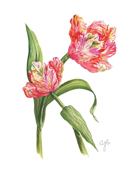 PARROT TULIPS Fine Art Watercolor Print