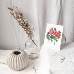 AUGUST: POPPIES {Year in Flowers Note Cards}
