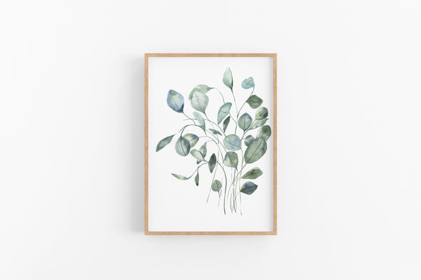 Silver Leaf Eucalyptus : A Thrill of Hope