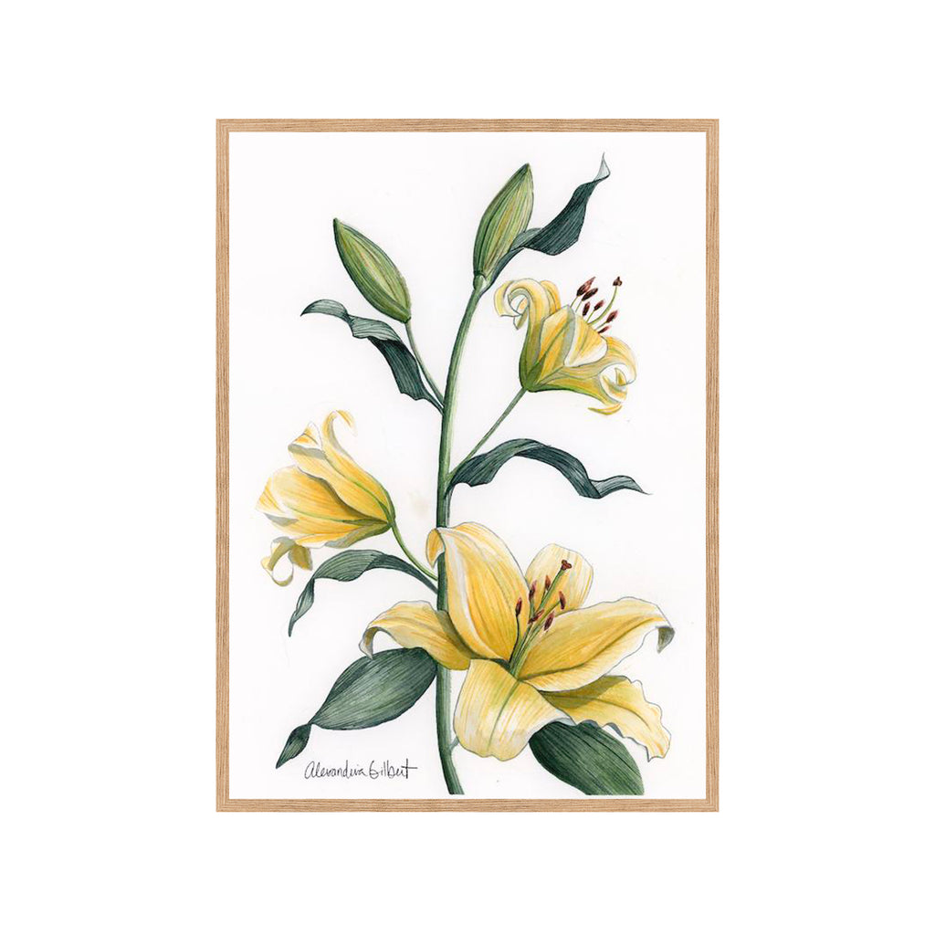 YELLOW LILY Fine Art Watercolor Print