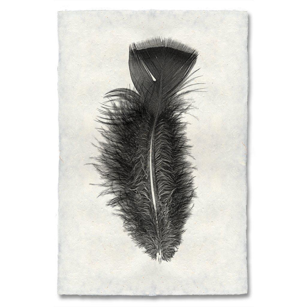 Feather Study X - Turkey
