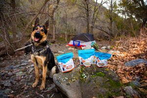best freeze dried food for backpacking