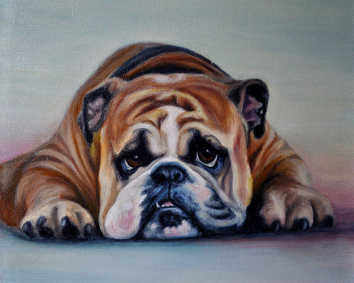 Bull Dog Giclee Canvas Prints