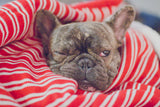How To Deal With French Bulldog Dermatitis?