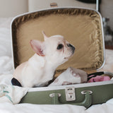 Tips To Reduce Travel Anxiety in French Bulldogs