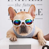 The Best French Bulldog Sunglasses! Does Your Dog Need Them?