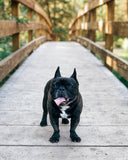 How To Protect French Bulldog Paws In The Summer? The Best Tips