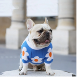 The Most Adorable French Bulldog Outfits in 2020