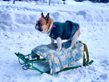The Best French Bulldog Paw Protection For The Winter Season