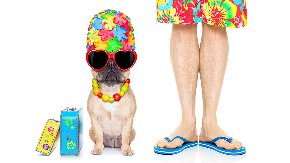 summer shirts for french bulldogs