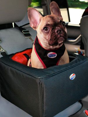 travelling with french bulldog