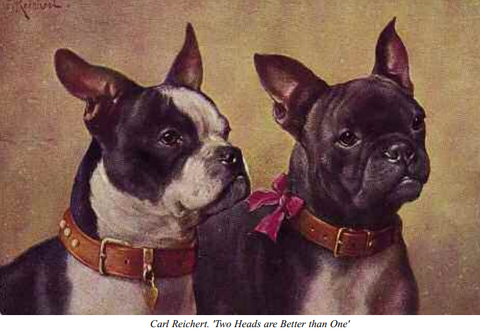 famous french bulldogs