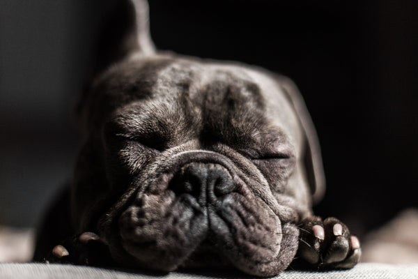 french bulldog beds-2