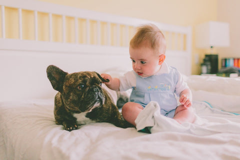 french bulldog and a baby