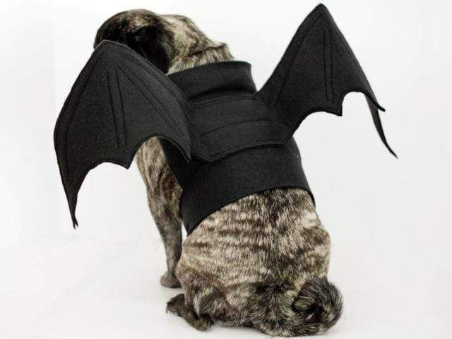 Frenchie World Shop Black / S Bat Pig Dog Costume