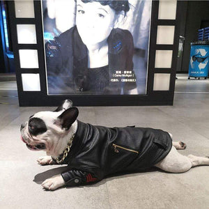 Frenchie World Shop Biker French Bulldog Leather Jacket