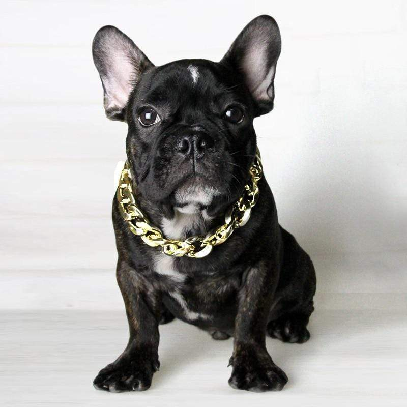 Frenchie World Shop Gold / 37cm Bling French Bulldog Collar