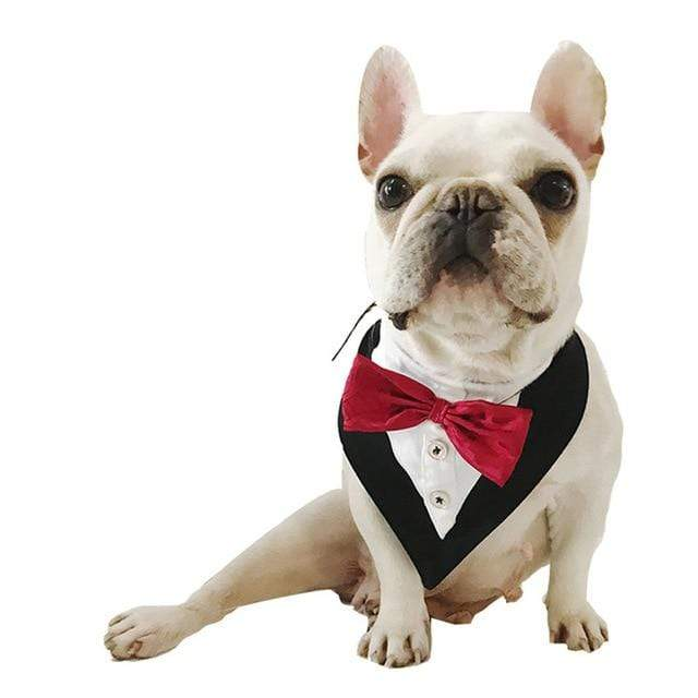 Frenchie World Shop Red / Neck 22-44cm Boy Dog Necktie Male Dog Collar Wedding Costume Bow tie Pet Dog Accessories Shiba Inu Poodle Bichon Pug French Bulldog Apparel