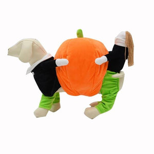 Frenchie World Shop Green / L Dog Carrying Pumpkin Costume
