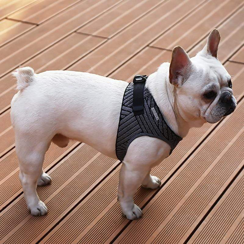 Frenchie World Shop Dog Pet Harness Adjustable Vest Walking Lead Leash for Pug  Soft Breathable Harnesses for Puppy Small Medium Dog