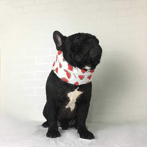 Frenchie World Shop French Bulldog Cooling Collar