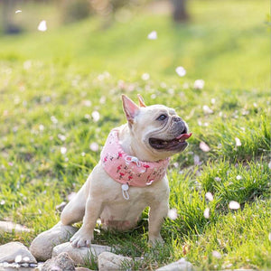 Frenchie World Shop Pink / L French Bulldog Cooling Collar