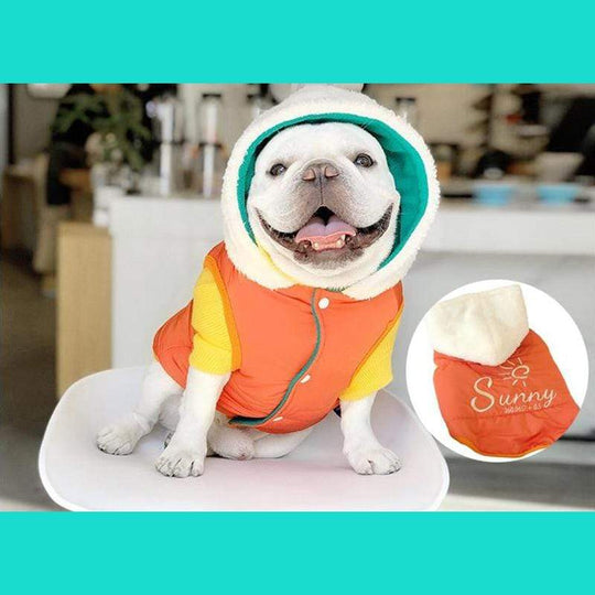 best winter coats for french bulldogs
